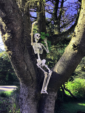 Skeleton in tree at Barview Jetty Park Campground. It was the week before Halloween.