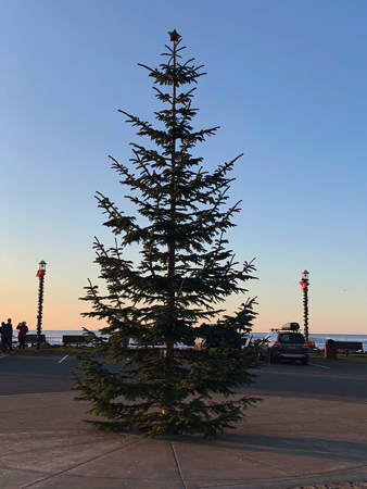 The community Christmas tree on Rockaway Beach awaits to be decorated after Thanksgiving Day.