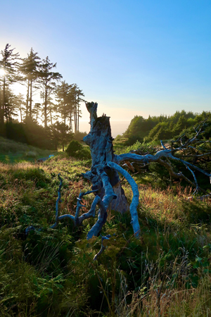 This ancient tree has seen its share of harsh weather on the overlook at Ecola State Park.