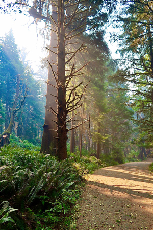 Morning sun streaming through the forest at cola State Park in Cannon Beach Oregon.