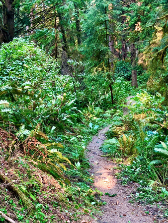 Trail through the forest in Ecola State Park, Cannon Beach Oregon.