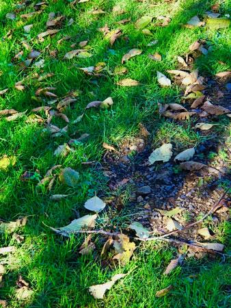 November day at Manzanita City Park.
