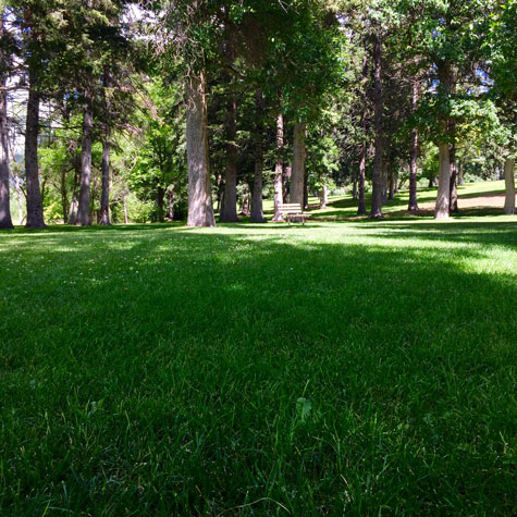 Lindley Park has beautifully manicured lawns.