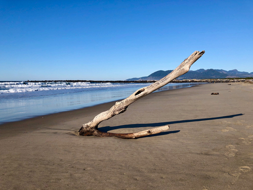Thanksgiving Day on Rockaway Beach was beautiful. Here is a large limb that washed up onshore, this morning.