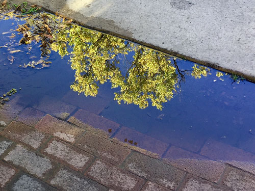Reflections in the puddles add to the beauty of Santa Fe Plaza in the early morning.
